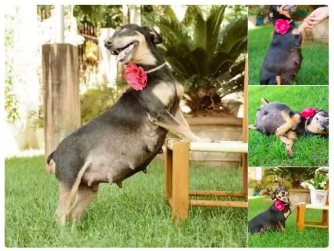 sesión de fotos para un perro