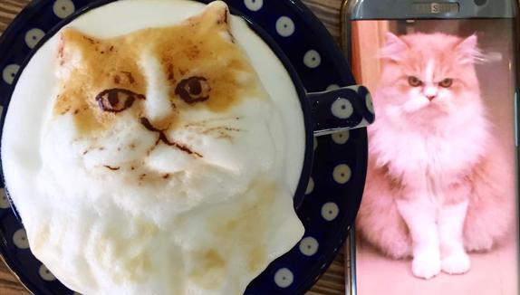 retrato de gato en espuma