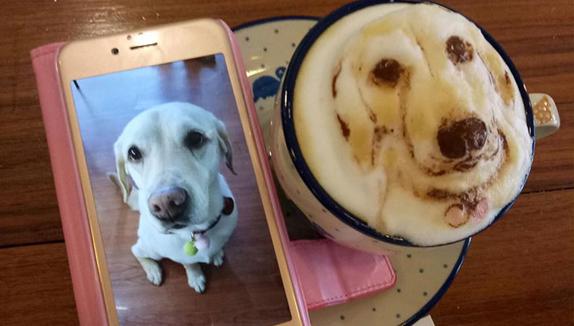 Perro labrador en espuma de café