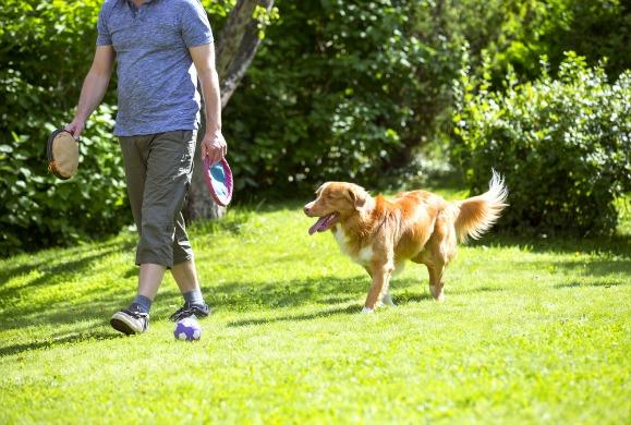 perro siguiendo a su dueño