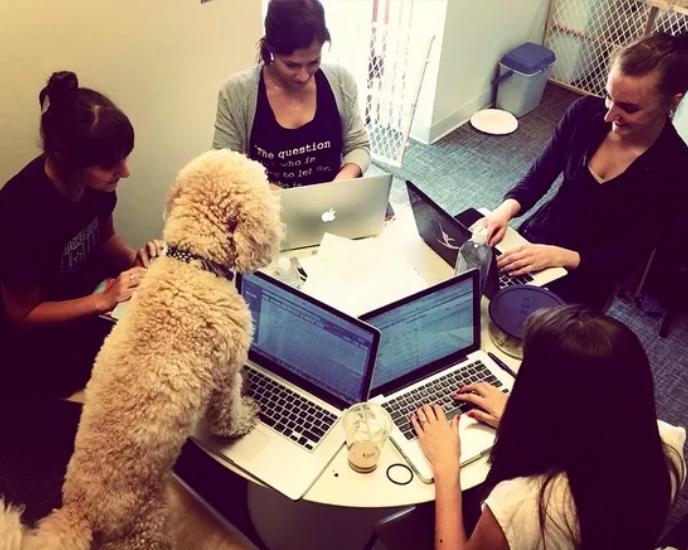 perro dirigiendo una reunión de trabajo