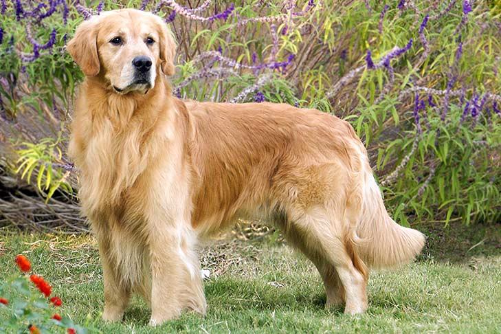 Los mejores cuidadores de mascotas y paseadores de la CDMX