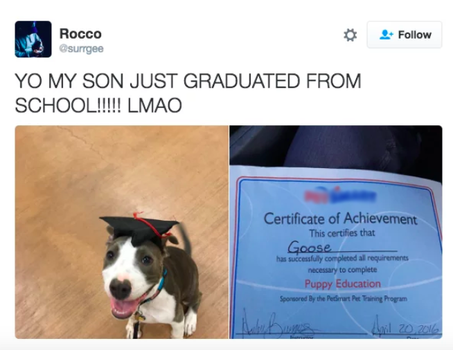 perro graduado