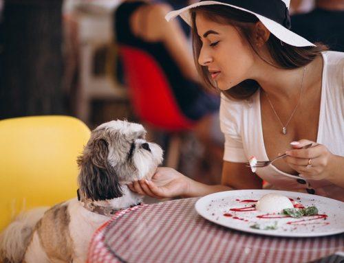 Lugares Petfriendly en la Condesa