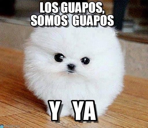perro_guapo