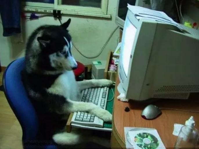 Perro trabajando en pc