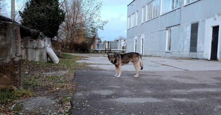 pension para perros puebla