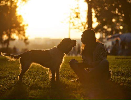Paseador de perros en Polanco y Condesa – Precios en la CDMX