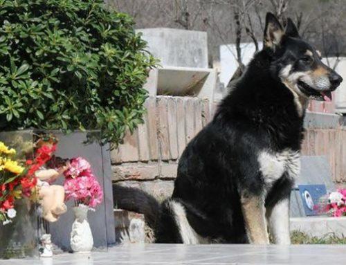 Guardería para perros en Santa Fe en CDMX (Cuajimalpa y Álvaro Obregón)