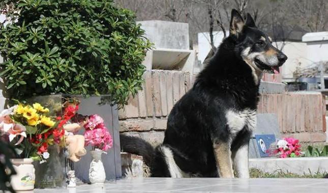 perro esperando en la tumba