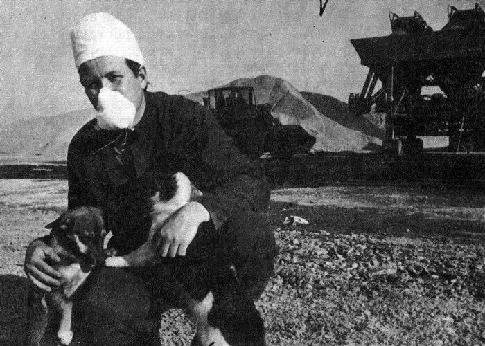 perros después de la explosión