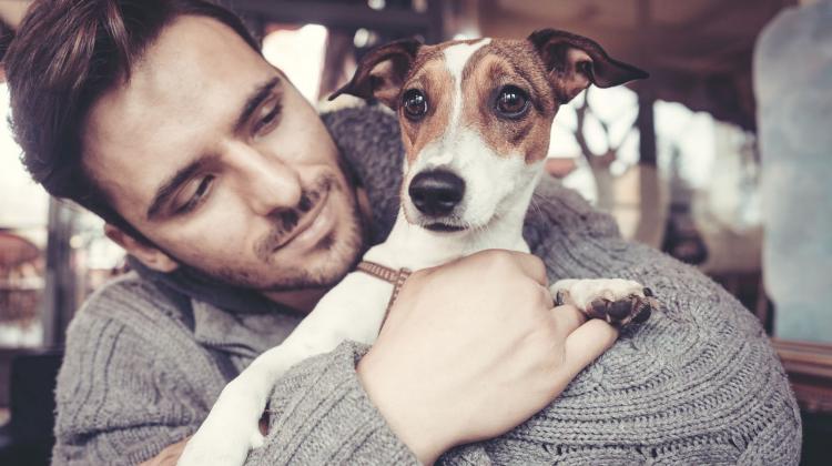 Perros ayudan contra la ansiedad