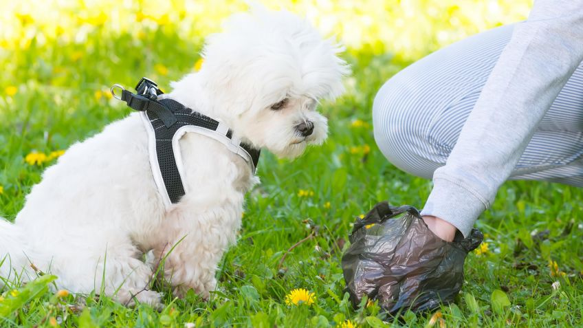dueño recogiendo popó de perro