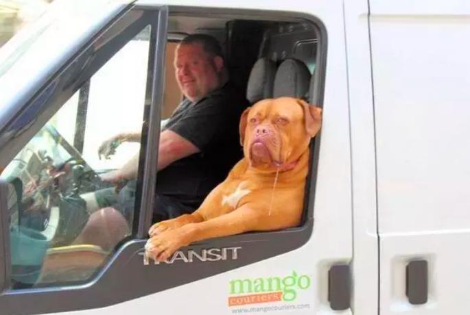 perro entregando paquetes