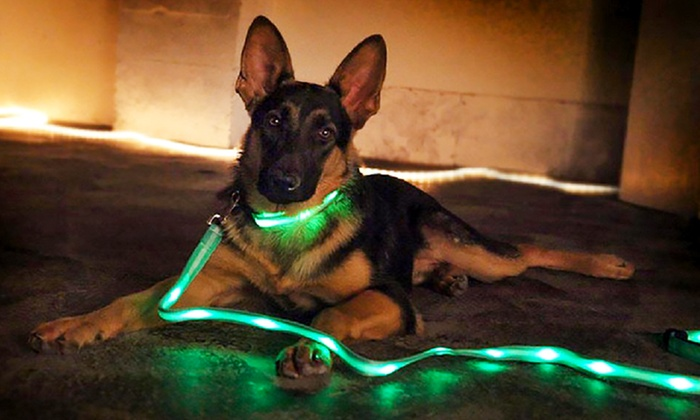 correa LED para perros