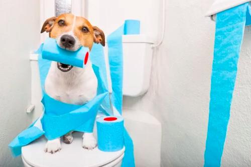 perro con papel de baño