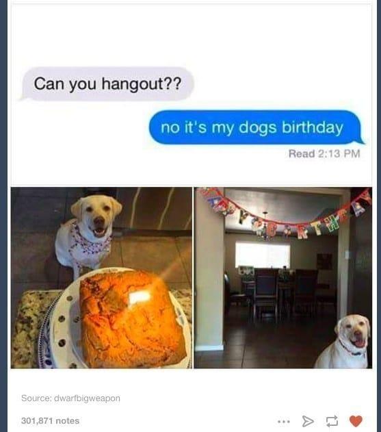 fiesta de cumpleaños para un perro