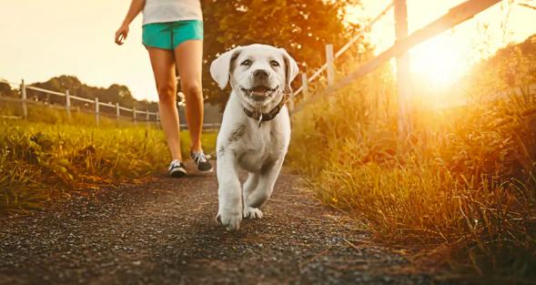 cachorro paseando
