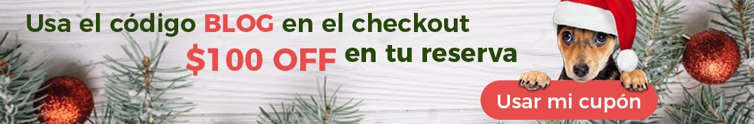 cupón navidad blog