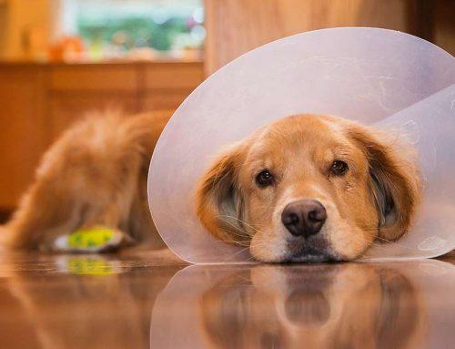 App de paseadores de perros en Anzures, Revolución y San Pedro