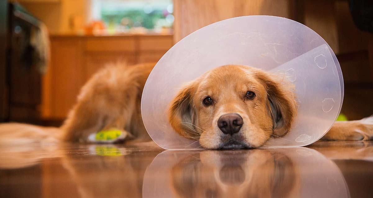 ¿Necesitas una pensión para perros en DF barata? Esta es tu solución