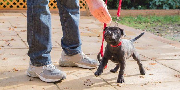 cachorro en entrenamiento