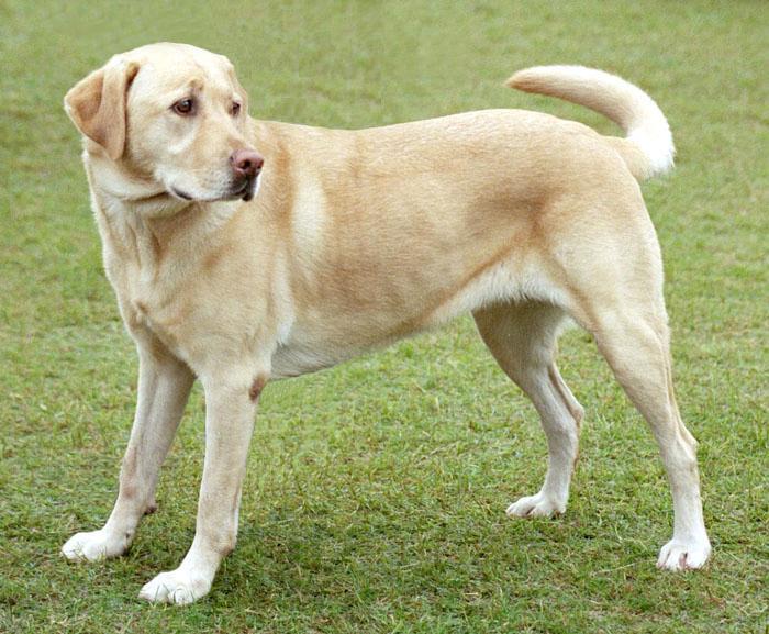 pension para perros o cuidadores de perros