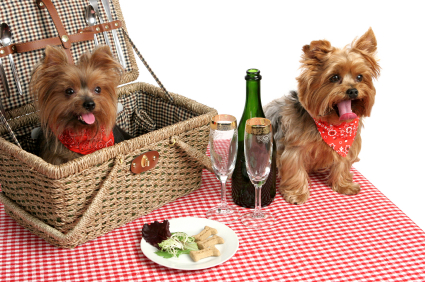 picnic con perros