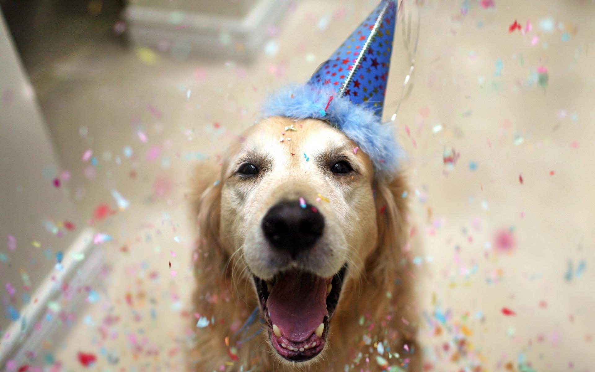 perro_celebrando