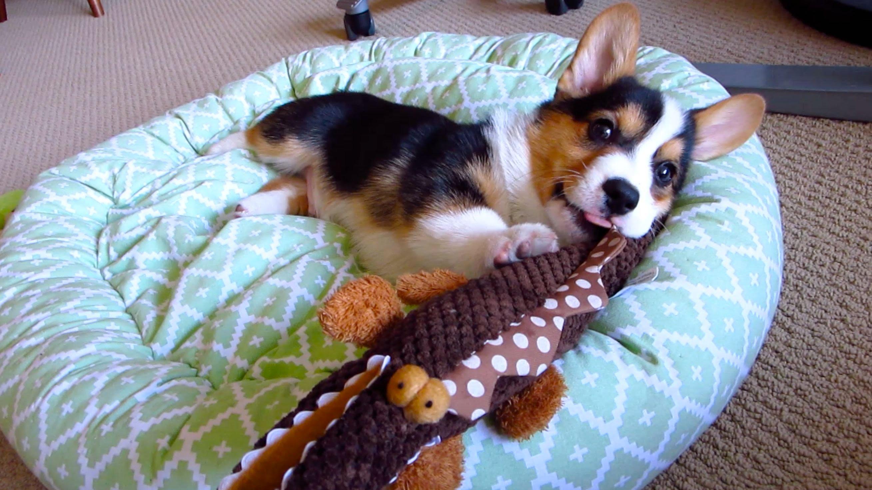 perro_juguete