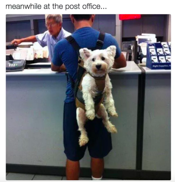 dueño cargando perro