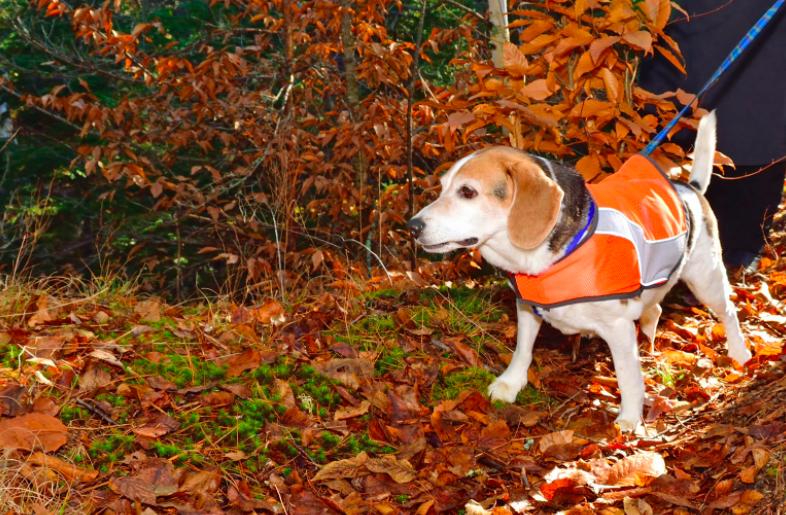 perro con chaleco reflectivo