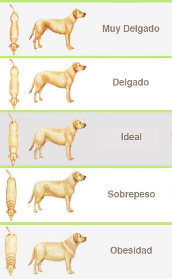 tabla para identificar sobrepeso en un perro
