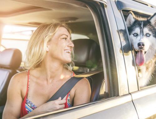 ¿Cómo tranquilizar a un perro en un auto? ¡Está muy nervioso!
