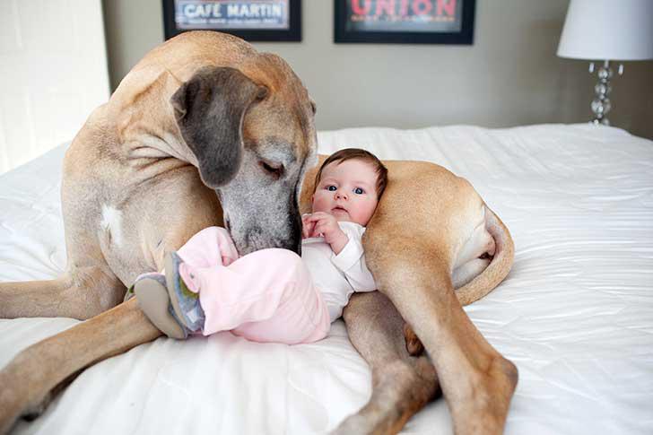 bebe y perro jugando