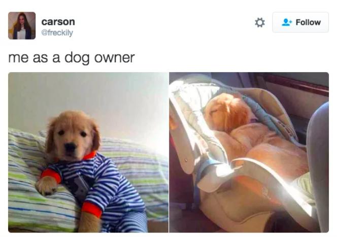 cuando consideras a tu perro como tu bebé