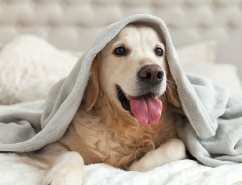 Cómo elegir un hotel para mascotas en Querétaro