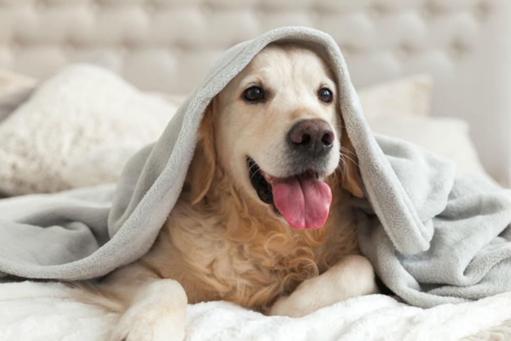 hotel para perro