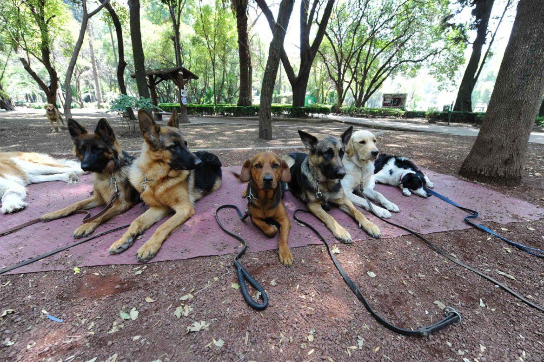 perros que no ladran a otros