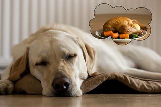 perro_comida