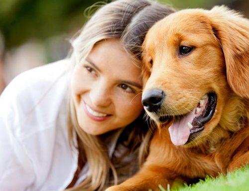 Mejores guarderías para perros de Zona Norte, Sur, Este, Oeste de CDMX