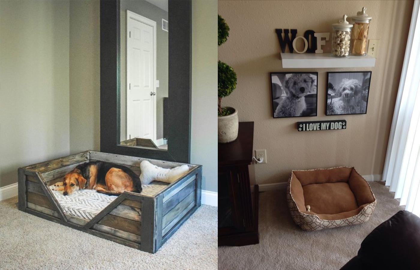 cuarto para perro