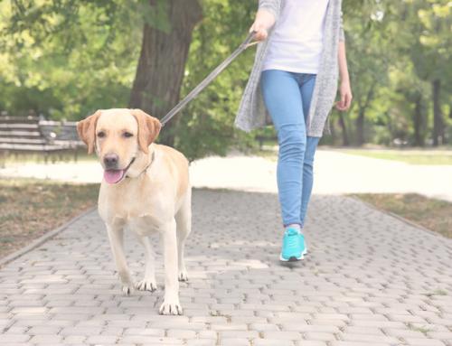 10 errores al pasear a tu perro que no debes hacer