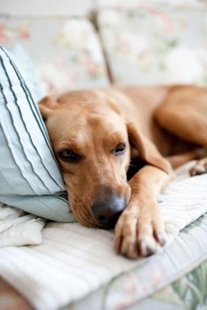 perro_dormido