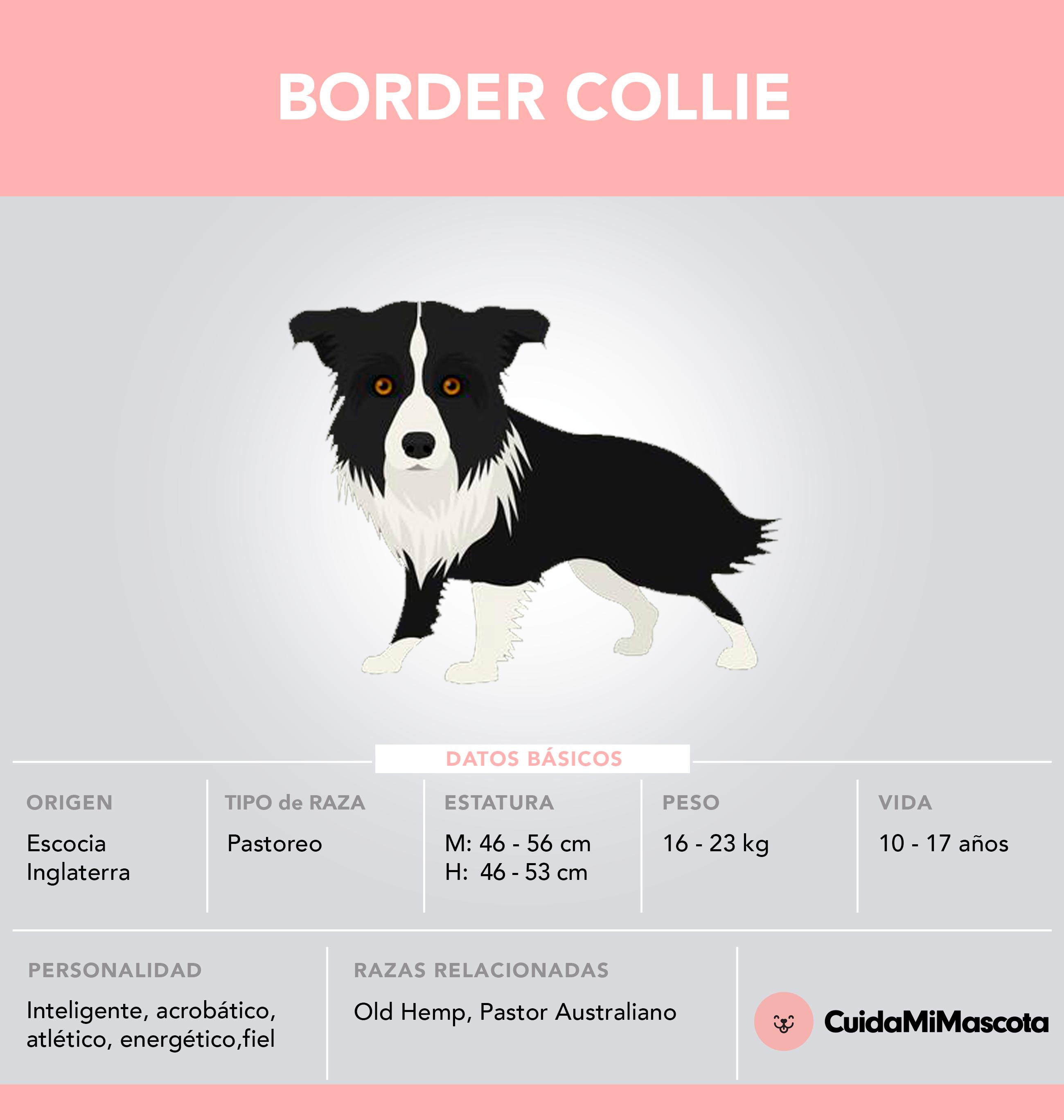 tabla de raza border collie