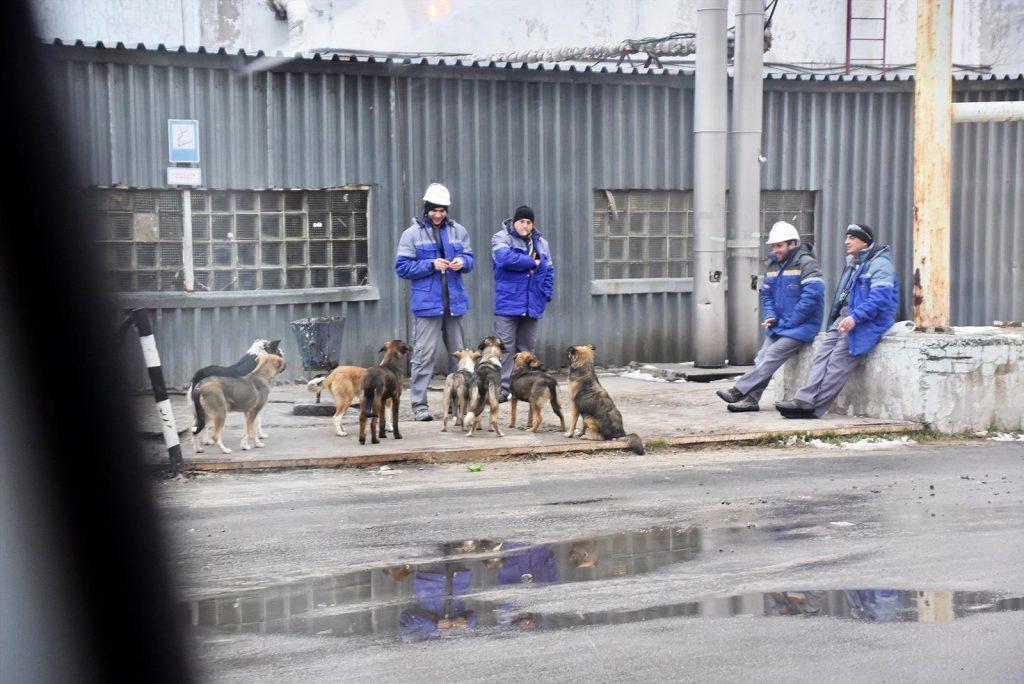 trabajadores alimentando perros en Chernobil