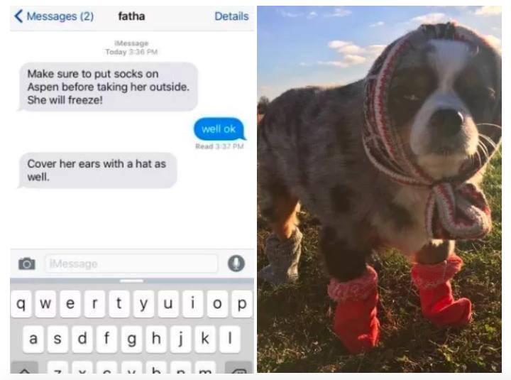perro con ropa