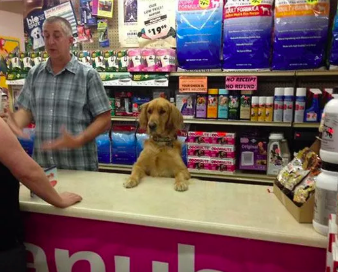 perro en mostrador