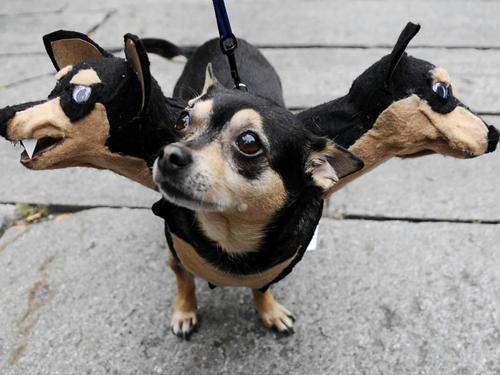 Perro disfrazado de perro de tres cabezas