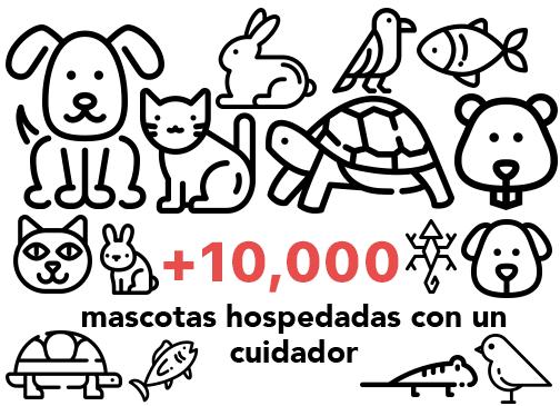 10 mil mascotas hospedadas con un cuidador